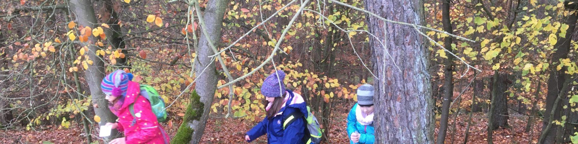 Schüler Der 3 Klasse Erkunden Den Wald Grundschule Kirchzell
